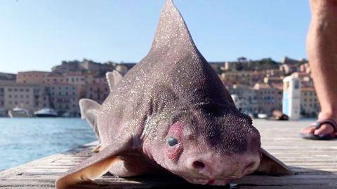Toter Tiefseehai sorgt für Kontroverse auf Facebook