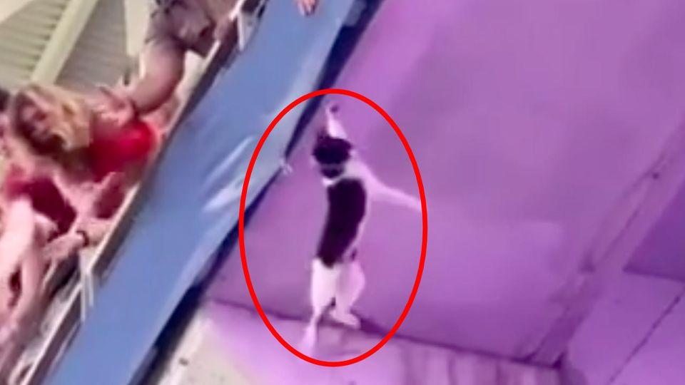 American-Football: Spektakuläre Rettungsaktion einer Katze während eines Spiels
