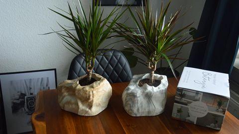 Das Set von Botanyia steht auf dem Tisch