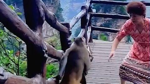 Ein Affe klaut einer Frau die Handtasche.