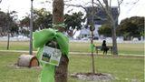 Eine grüne Schleife an einem Baum im Erinnerungsgarten in Kapstadt verweist auf einen Menschen, der an Corona gestorben ist