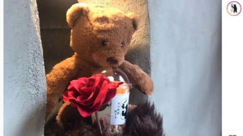 Ein Teddy im japanischen Bärentatzen-Café