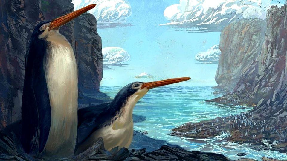 Schüler finden Fossilien von Riesen-Pinguin