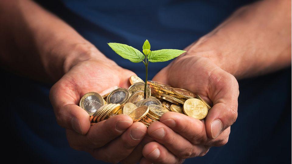 Nachhaltige Geldanlage gewinnt an Bedeutung