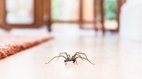 Eine Spinne krabbelt über den Boden