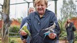 Angela Merkel in Marlow: Auch Sittiche sind im Vogelpark zu finden.