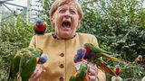 Ob es Schmerz oder Überraschung war, ist nicht ganz klar. Einer der Vögel zwickte jedenfalls daneben und erwischte dabei die Kanzlerin.