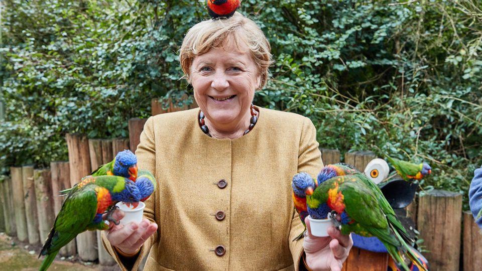 Mit schrägen Vögeln hatte die Kanzlerin in den letzten 16 Jahren ausreichend zu tun. So bunt waren sie aber selten.