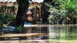 Lopburi, Thailand. Ein Junge schwimmt durch sein Dorf. Nach schwerem Monsunregen in Thailand stehen vor allem in den Zentralregionen mindestens 70.000 Häuser unter Wasser. Betroffen sind bislang 30 Provinzen, darunter vor allem die historische Region Sukhothai 400 Kilometer nördlich der Hauptstadt Bangkok.