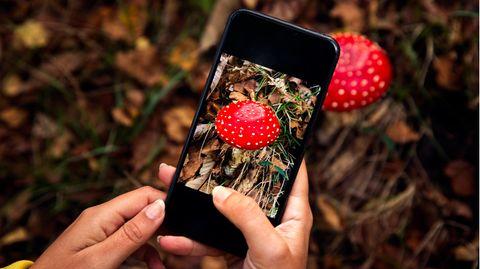 Giftnotruf warnt vor Handy-Apps für Pilzsammler