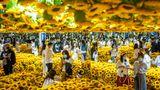 Peking, China. In einem Meer von Sonnenblumen finden sich Besucherinnen und Besucher einer interaktiven Ausstellung zu den Gemälden des Malers Vincent van Gogh. Der Niederländer, der 1890 starb, ist unter anderem berühmt für seine Sonnenblumen-Motive.