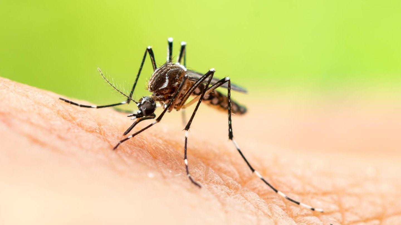 Ein Mann hält eine Fliegenklatsche in der Hand