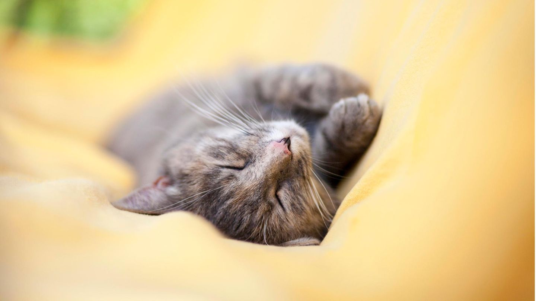 Eine Katze schläft auf einer gelben Decke