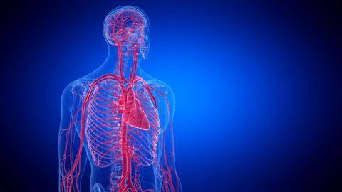 Betroffene erzählen: Belastbar, aber verletzlich: Was unser Herz langfristig fit hält