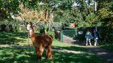 Eines der Tiere beim Auslauf im Garten.