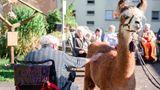 Praktisch: Die Tiere haben genau die richtige Höhe, um vom Rollstuhl aus gestreichelt zu werden.