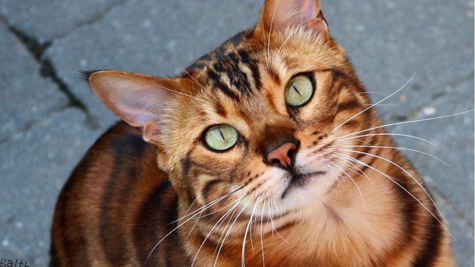 Der schönste Kater der Welt? Dieser Instagram-Katze verzaubert seine Follower