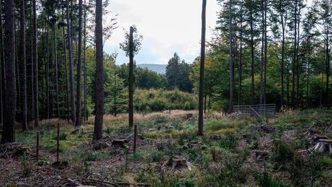 Blick in einen Wald