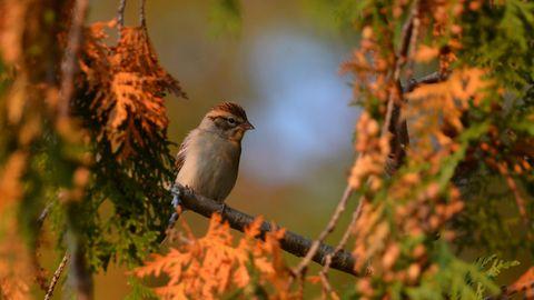 Wenn Sie Vögel beobachten wollen, garantiert Ihnen ein passendes Fernglas die beste Sicht.