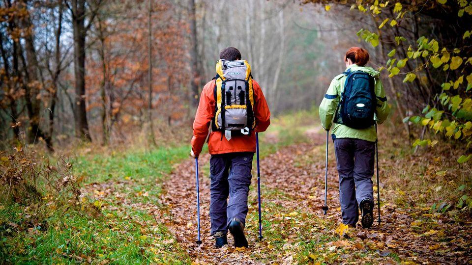 Laufen: Zwei Wanderer auf einem Waldweg
