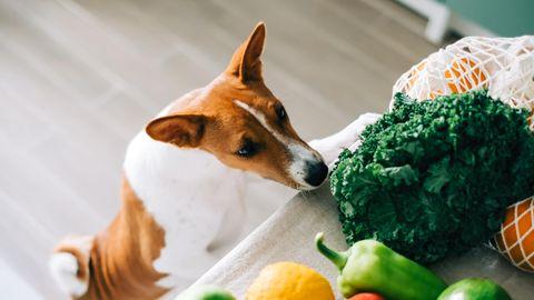 Ein Hund schnüffelt an verschiedenem Gemüse, das auf einem Tisch liegt.