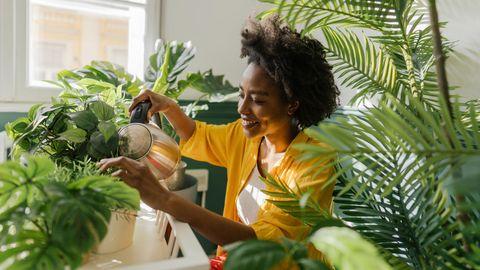 Eine Frau gießt ihre Zimmerpflanzen.