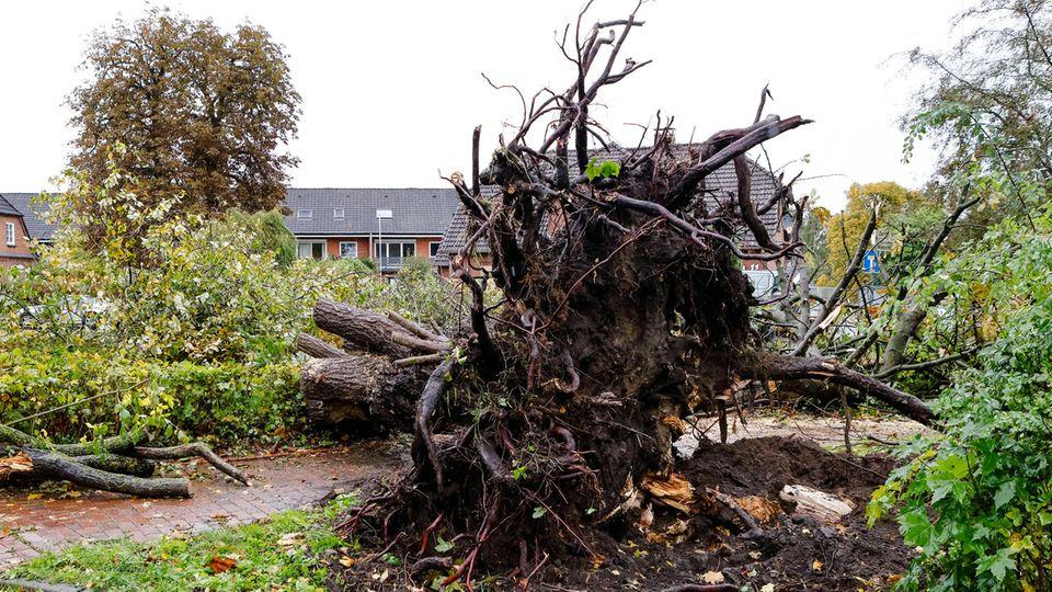 Entwurzelt: Ein Tornado verwüstete die Ortschaft Klasudorf bei Kiel.