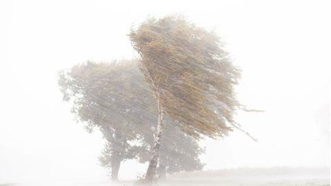 Starkregen, Hagel und starke Sturmböen ziehenüber einen Feld mit Birken hinweg