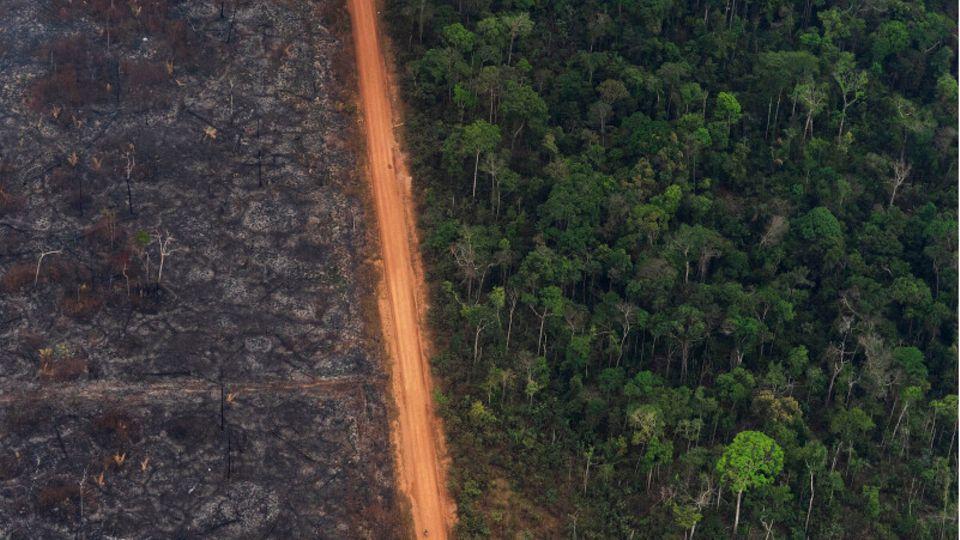 Blick auf ein Waldgebiet, in dem der linke Teil des Waldes durch Waldbrände komplett zerstört wurde