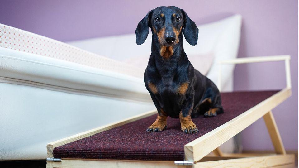 Ein Hund sitzt auf einer Hunderampe am Bettrand