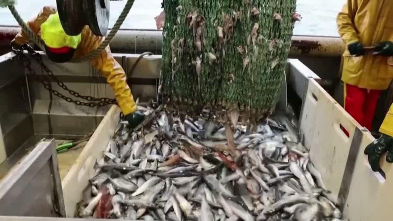 """Video: Fischereistreit: """"Es ist kein Krieg, aber ein Kampf"""""""