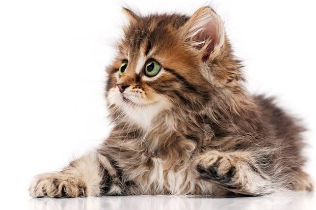 """Genau Ihr Ding? Dann sollten Sie sich beim """"Internet Cat Video Festival"""" bewerben."""