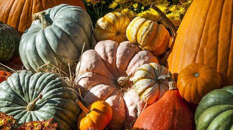 Kaum ein Gemüse ist so eng mit dem Herbst verbunden wie der Kürbis. Es gibt ihn in vielen verschiedenen Sorten, und doch landet er meist als Suppe auf dem Teller. Dabei eignet er sich auch für viele andere, zum Beispiel süße Gerichte.