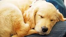 """Süß! Gerade ältere Menschen profitieren von dem Geschäftsmodell - ein """"Hund auf Zeit"""" hilft auch gegen die Einsamkeit im Alter."""