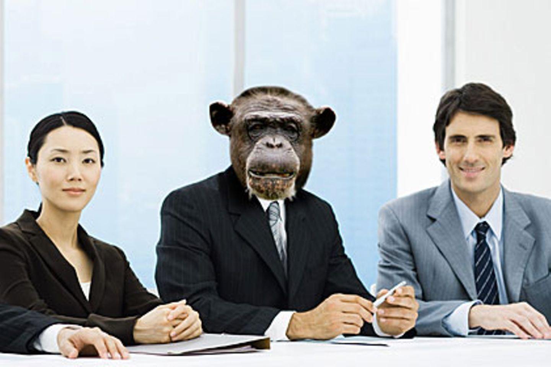 Mancher Chef verhält sich wie auf einem Pavianfelsen. Das schadet nicht nur den Mitarbeitern, sondern kostet auch das Unternehmen viel Geld