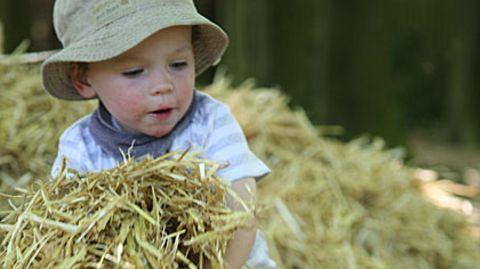 Wer die ersten Lebensjahre auf einem Bauernhof aufwächst, erkrankt seltener an Allergien