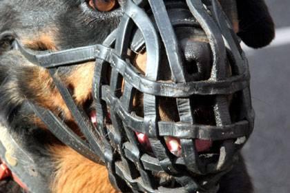 Immer wieder sorgen Hundeattacken auf Kleinkinder für blutige Zwischenfälle