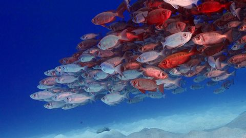 """""""Naturwunder Erde"""": Palau: Massenauflauf unter Wasser"""