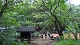 Aufbruch in den grünen Dschungel  An der Napali-Küste wird das Terrain so zerklüftet, dass keine Straße um die Insel herumführt. Im Haena State Park endet der Highway 560, nur noch zu Fuß geht es weiter nach Westen: Der Kalalau Trail gehört zu einem der anspruchsvollsten Touren auf den Hawaii-Inseln. Für eine Wanderung eignet sich der Monat September am besten, weil es dann die wenigsten Niederschläge gibt.