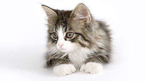 Kleine Katzen lösen beim Tierquäler Hempel keine Beschützerinstinkte aus