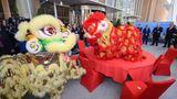 Chinesisches Eröffnungszeremonie vor dem Eingang: Zwei Löwen tanzen erst um und später auf einem runden Tisch. Dann verspeisen die Monster kleine Haufen von Silbermünzen und einen grünen Salatkopf – ein Ritual, das Glück und Wohlstand verspricht.