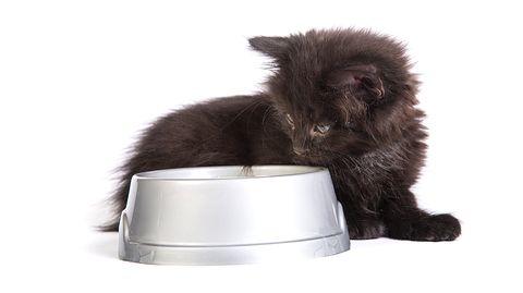Na, was ist denn da drin? Nicht jedes Katzenfutter ist auch wirklich gut für Ihr Haustier.