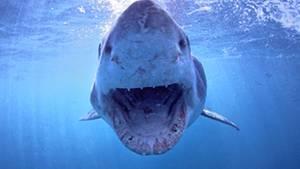 Hai-Attacken gibt es in Kalifornien immer mal wieder, tödlich enden sie aber selten