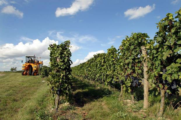 Bei europäischen Weinen gibt es viele Gemeinsamkeiten hinsichtlich des Etiketts. Sie unterliegen dem EU-Recht.