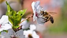 Im Sexualkunde-Unterricht geht es nicht nur um Blumen und Bienchen - für sechs Schüler aus Borken war das anscheinend zu viel