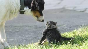 Was sagt die Vorliebe für Hund oder Katze über den Charakter eines Menschen aus?