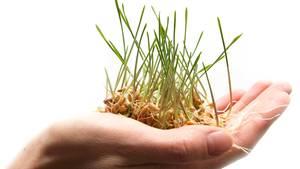 Wissenschaftler haben große Teile des Weizengenoms enthüllt - und hoffen nun auf eine schnellere Züchtung besserer Sorten.