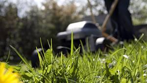Dichtes Gras, saftig grün und duftend frisch – will sich der Gärtner im Sommer an seinem Rasen freuen, muss er einiges dafür tun