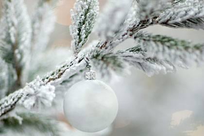 Weißes Gift statt funkelnde Pracht: In vier von sechs getesteten Schneesprays hat Greenpeace eine krebserregende Substanz entdeckt.