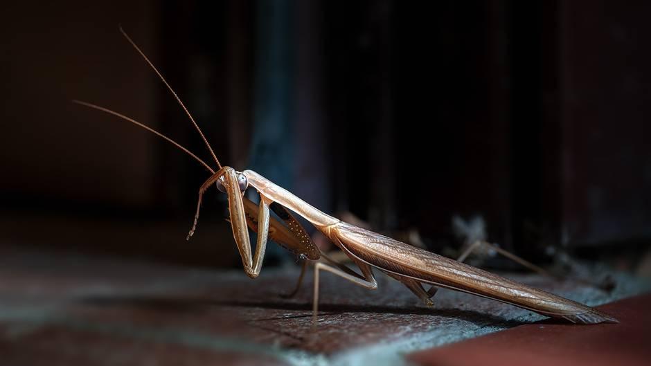"""Denise, Bildredakteurin: """"Ich liebe Insekten und bin immer wieder fasziniert davon, wie menschlich diese kleinen Krabbeltierchen aussehen können. Die scheinbar schüchterne Geste dieser Gottesanbeterin verzückt mich jedes Mal aufs Neue.""""      Mehr Fotos von RoKuin der VIEW Fotocommunity    Aktionen und Informationen aus der VIEW Fotocommunity auf Facebookoder Twitter"""